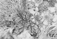flowers sketch