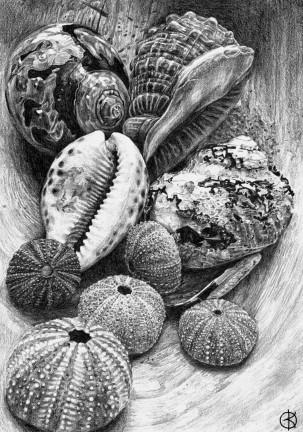 BW sketch shells