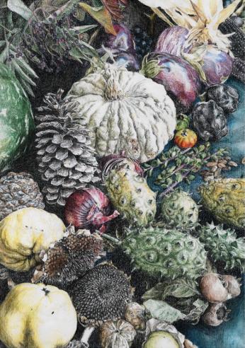 fruit sketch